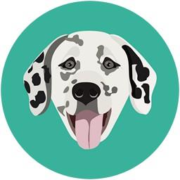 Hund Dalmatiner Gesicht
