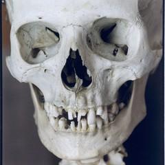 Human Skeleton Close-Up