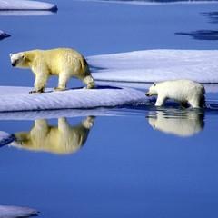 Eisbären Familie