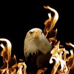 Eagle In The Flames