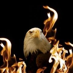 Adler In Den Flammen