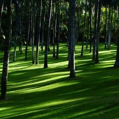 Lokaler Baum bietet Schatten