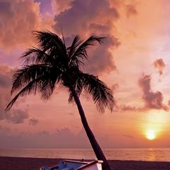 Beruhigende Palm View