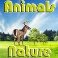 Animals Nature