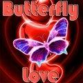Farfalla Amore