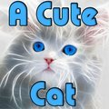 Ein süße Katze