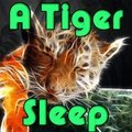 A Tiger Sleep