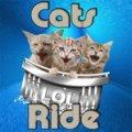Katzen Fahren