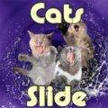 Katzen Rutschen