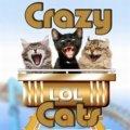Verrückte Katzen