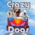 Verrückte Hunde