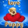Ama il cucciolo