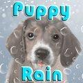 Puppy Rain