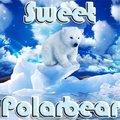 Ours polaire mignon