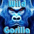 Gorilles sauvage